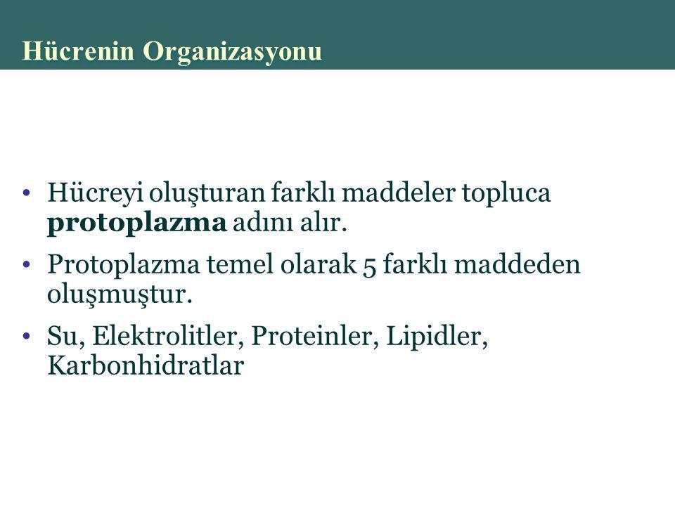 Hücrenin Organizasyonu