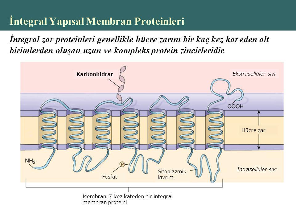 İntegral Yapısal Membran Proteinleri
