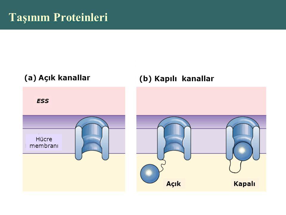 Taşınım Proteinleri Açık kanallar (b) Kapılı kanallar Açık Kapalı ESS
