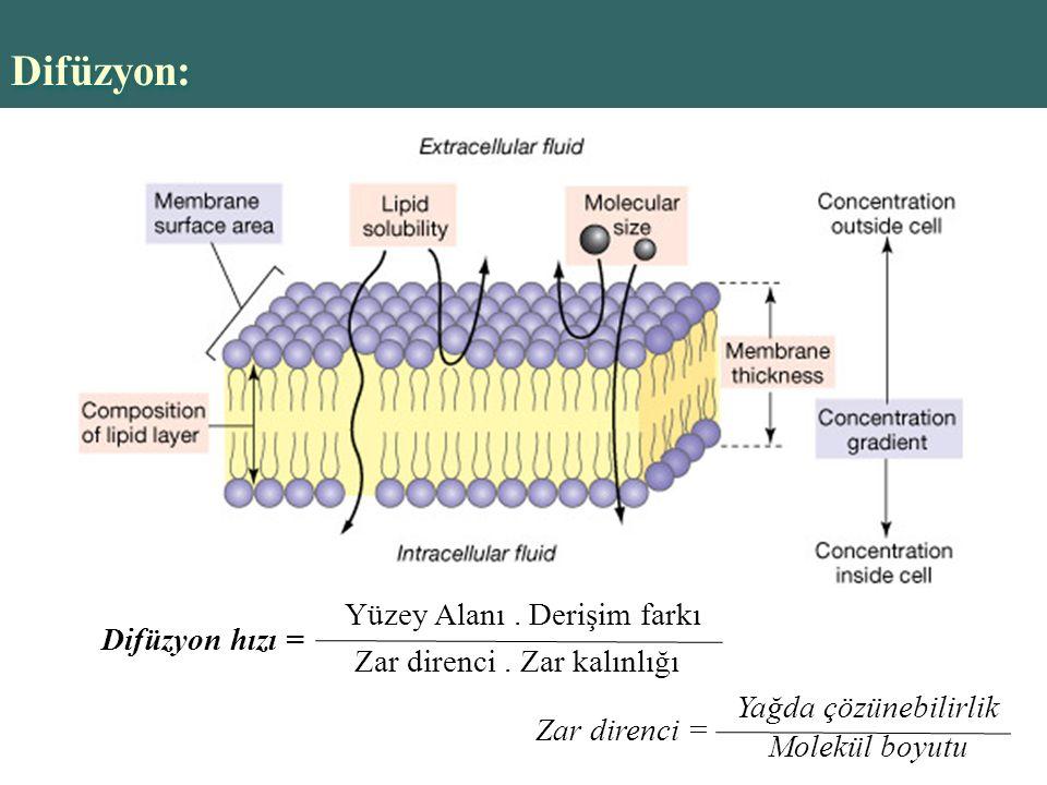 Difüzyon: Yüzey Alanı . Derişim farkı Difüzyon hızı =