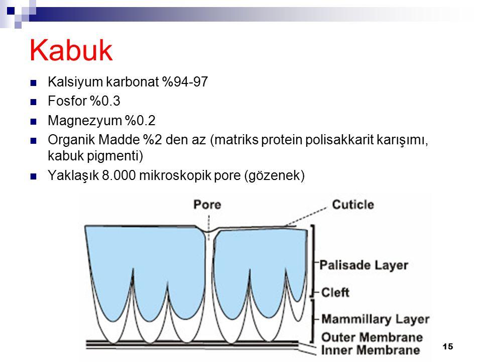 Kabuk Kalsiyum karbonat %94-97 Fosfor %0.3 Magnezyum %0.2