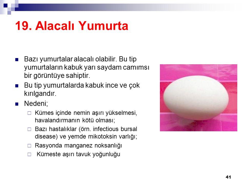 19. Alacalı Yumurta Bazı yumurtalar alacalı olabilir. Bu tip yumurtaların kabuk yarı saydam camımsı bir görüntüye sahiptir.