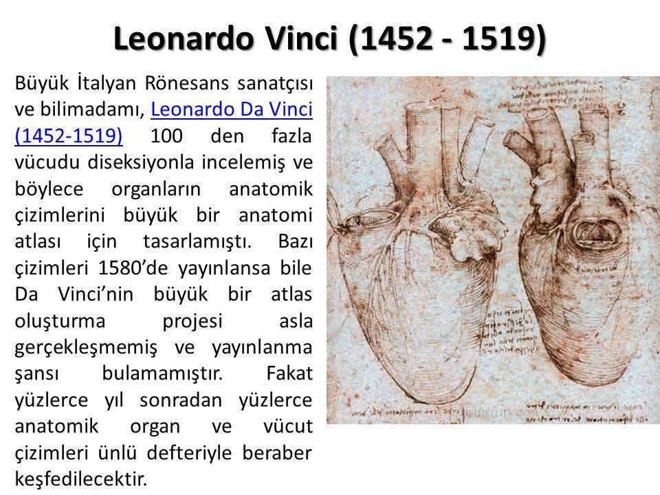 Leonardo Vinci (1452 - 1519)