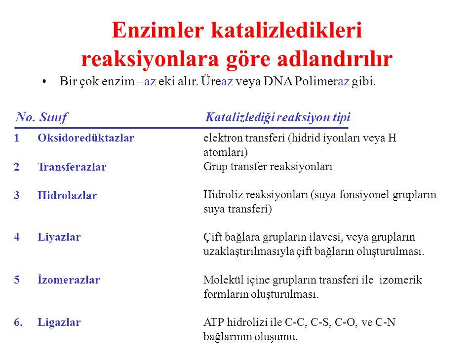 Enzimler katalizledikleri reaksiyonlara göre adlandırılır