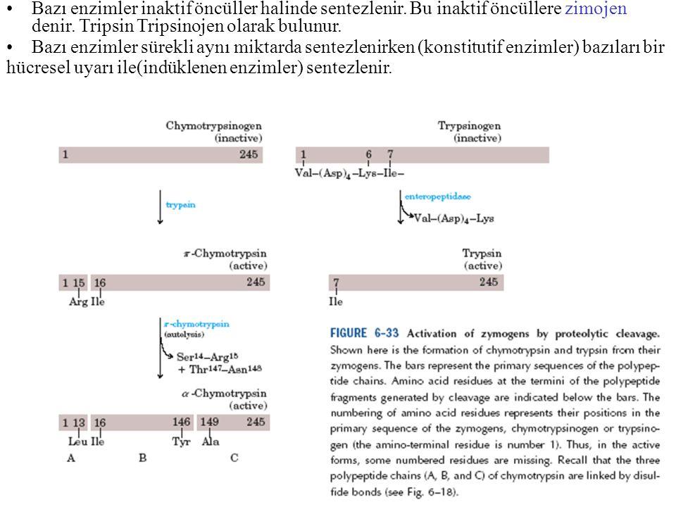 Bazı enzimler inaktif öncüller halinde sentezlenir