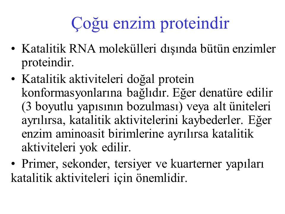 Çoğu enzim proteindir Katalitik RNA molekülleri dışında bütün enzimler proteindir.