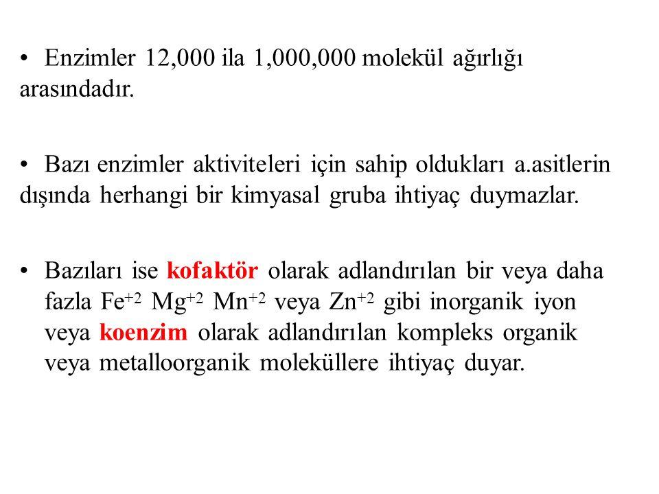 Enzimler 12,000 ila 1,000,000 molekül ağırlığı