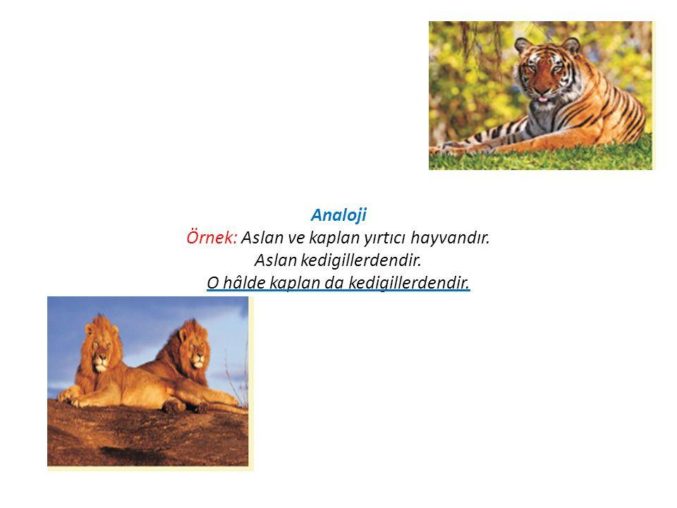 Analoji Örnek: Aslan ve kaplan yırtıcı hayvandır