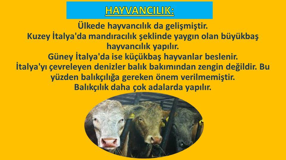 HAYVANCILIK: Ülkede hayvancılık da gelişmiştir.