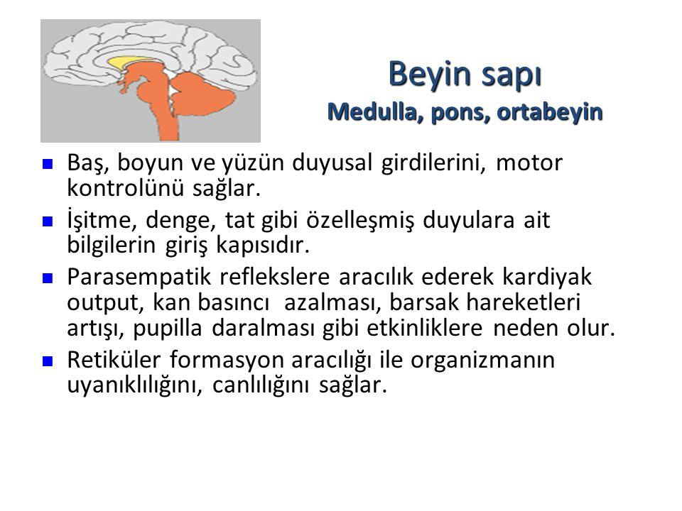Beyin sapı Medulla, pons, ortabeyin
