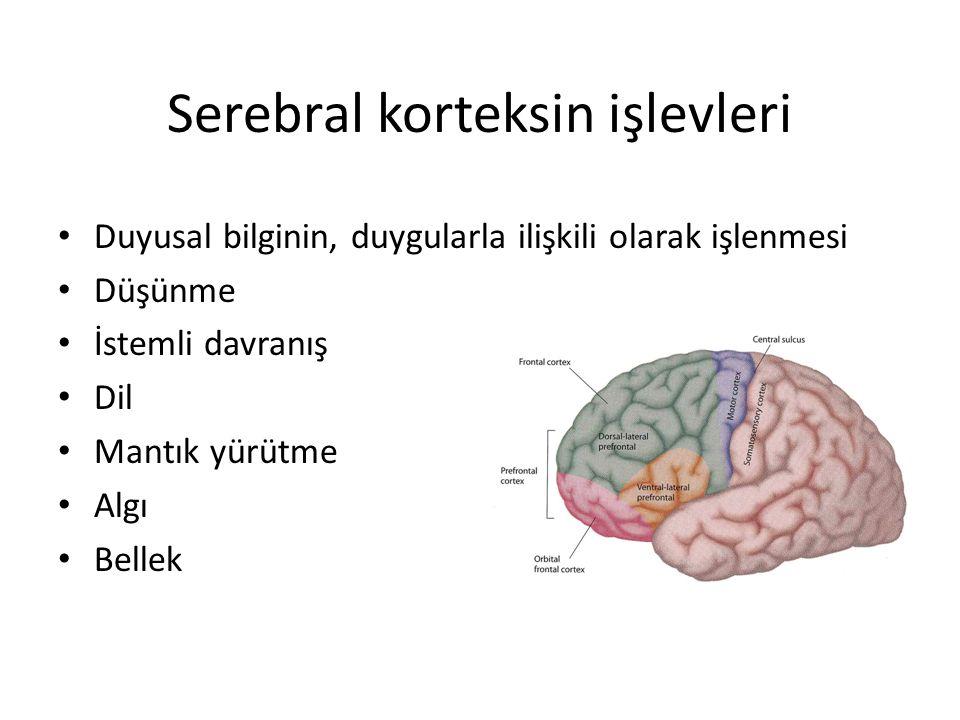 Serebral korteksin işlevleri