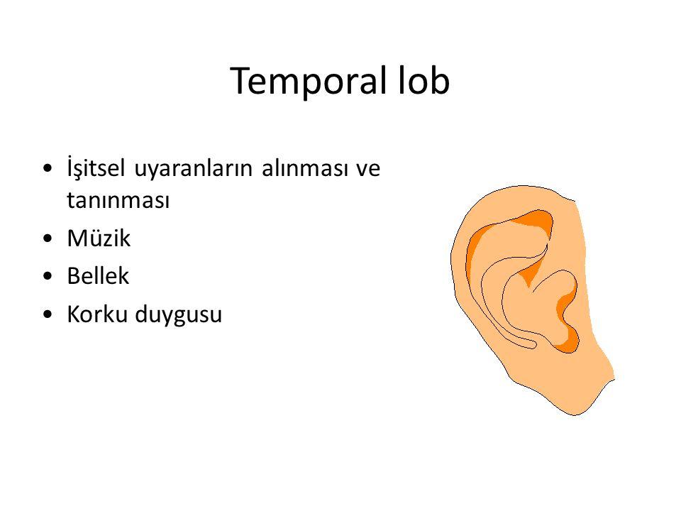 Temporal lob İşitsel uyaranların alınması ve tanınması Müzik Bellek