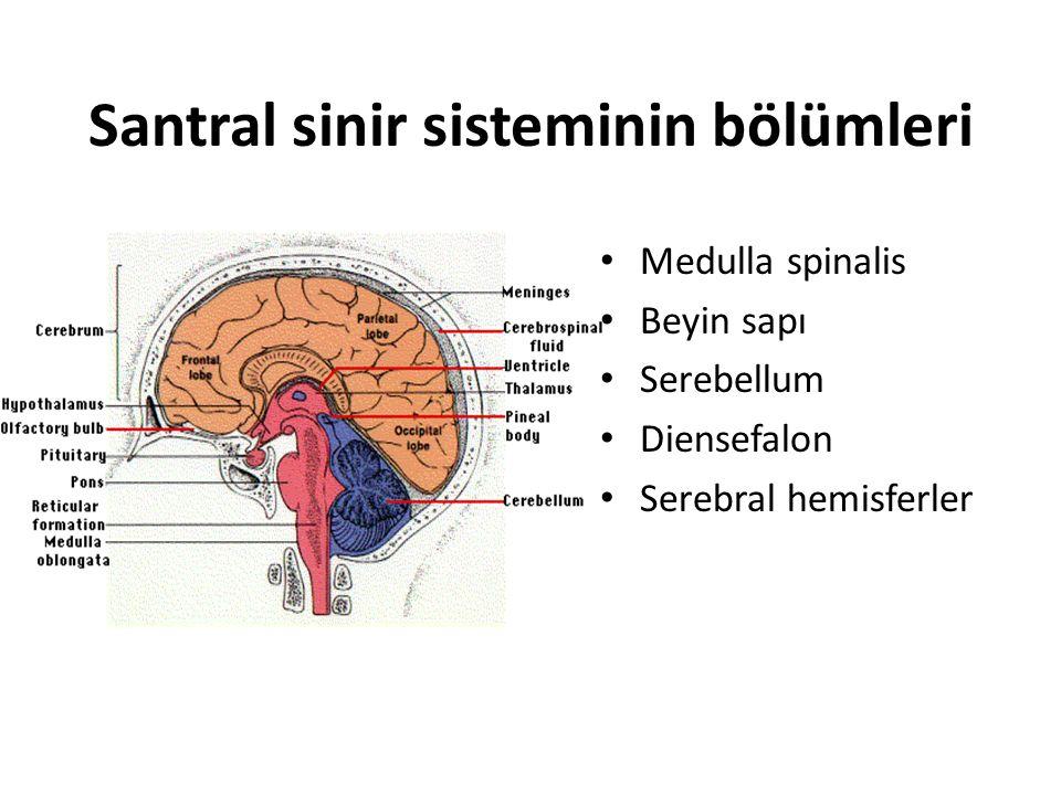 Santral sinir sisteminin bölümleri