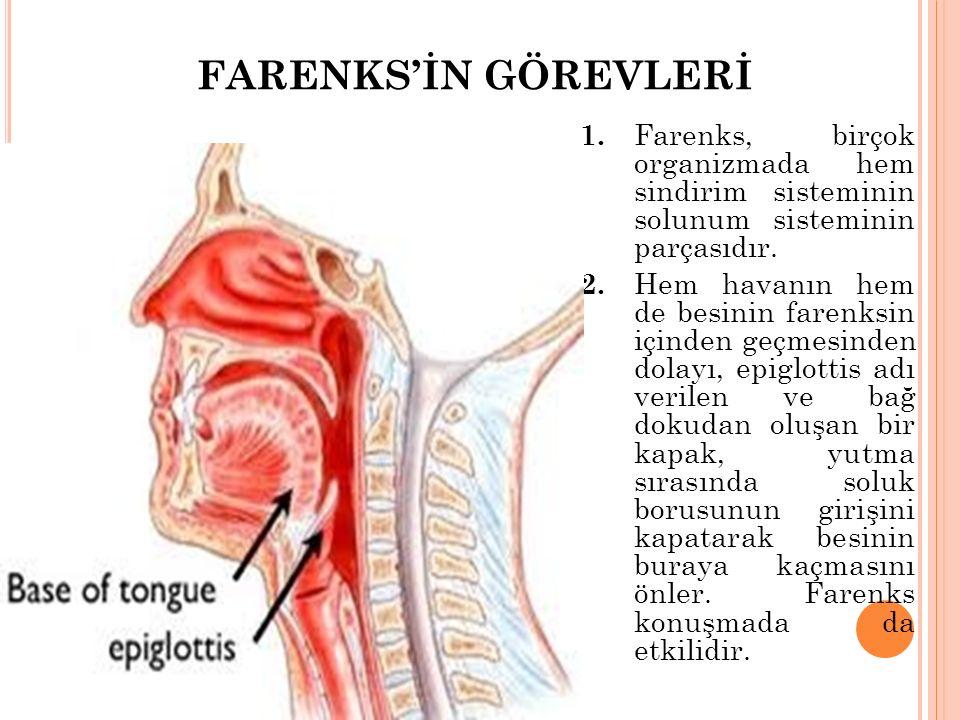 FARENKS'İN GÖREVLERİ 1. Farenks, birçok organizmada hem sindirim sisteminin solunum sisteminin parçasıdır.