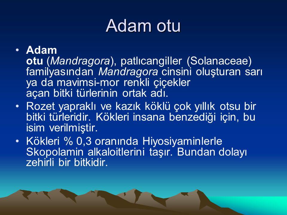 Adam otu