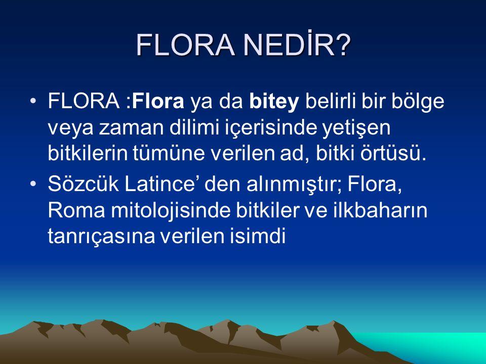 FLORA NEDİR FLORA :Flora ya da bitey belirli bir bölge veya zaman dilimi içerisinde yetişen bitkilerin tümüne verilen ad, bitki örtüsü.