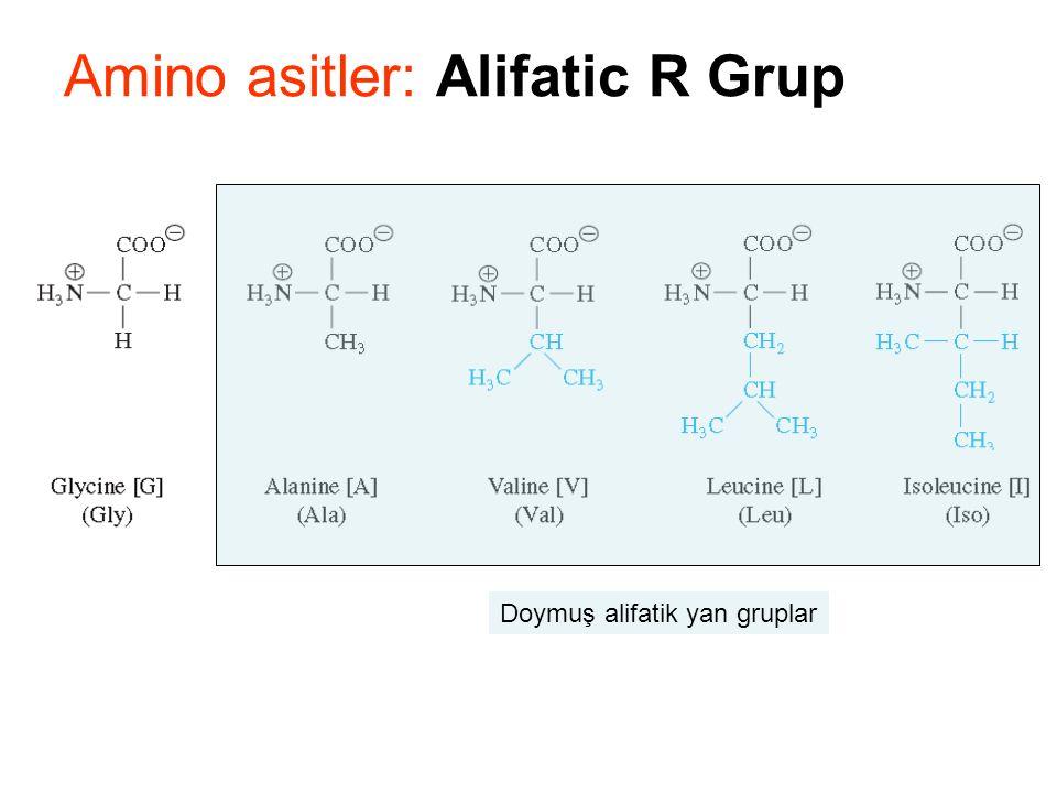 Amino asitler: Alifatic R Grup