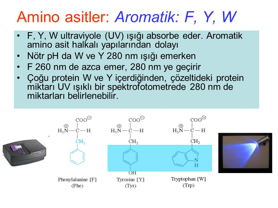 Amino asitler: Aromatik: F, Y, W