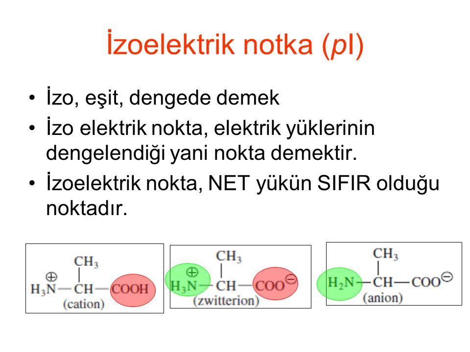 İzoelektrik notka (pI)