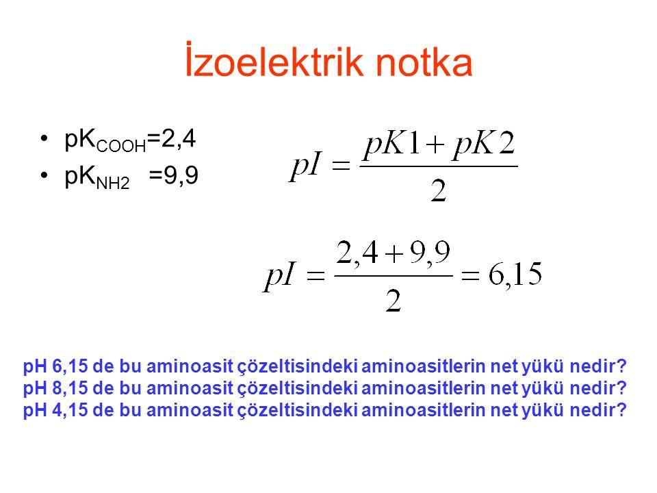 İzoelektrik notka pKCOOH=2,4 pKNH2 =9,9