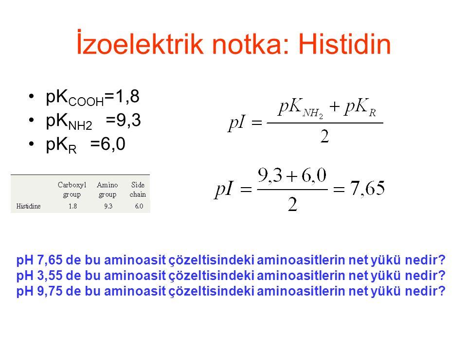 İzoelektrik notka: Histidin