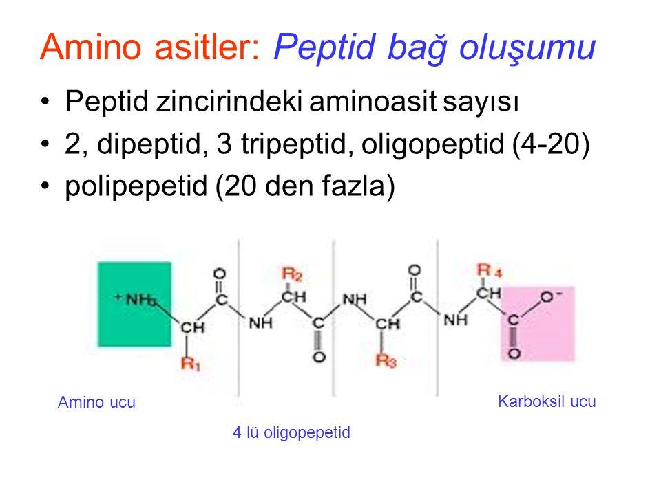 Amino asitler: Peptid bağ oluşumu