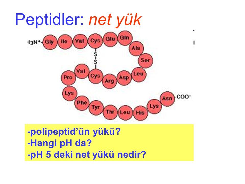 Peptidler: net yük -polipeptid'ün yükü -Hangi pH da