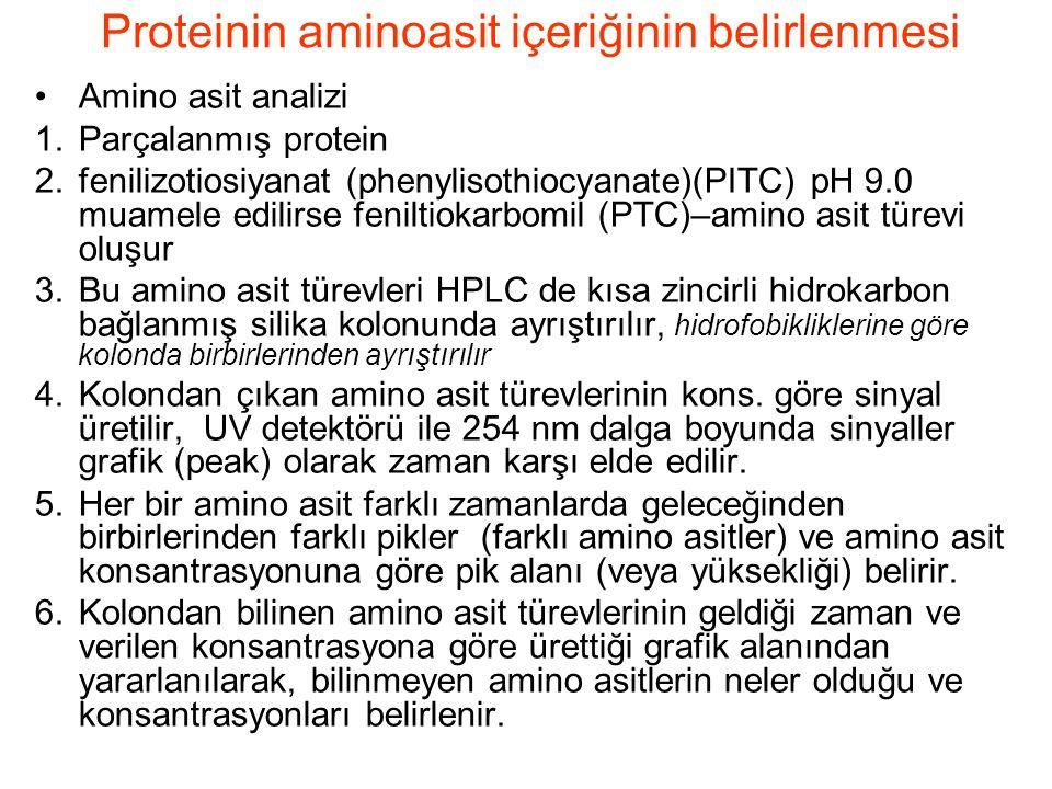 Proteinin aminoasit içeriğinin belirlenmesi