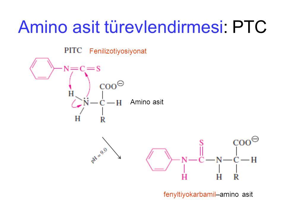 Amino asit türevlendirmesi: PTC