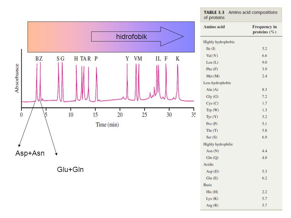 hidrofobik Asp+Asn Glu+Gln