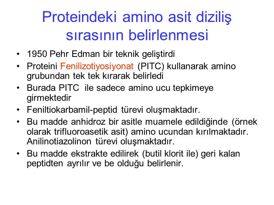 Proteindeki amino asit diziliş sırasının belirlenmesi