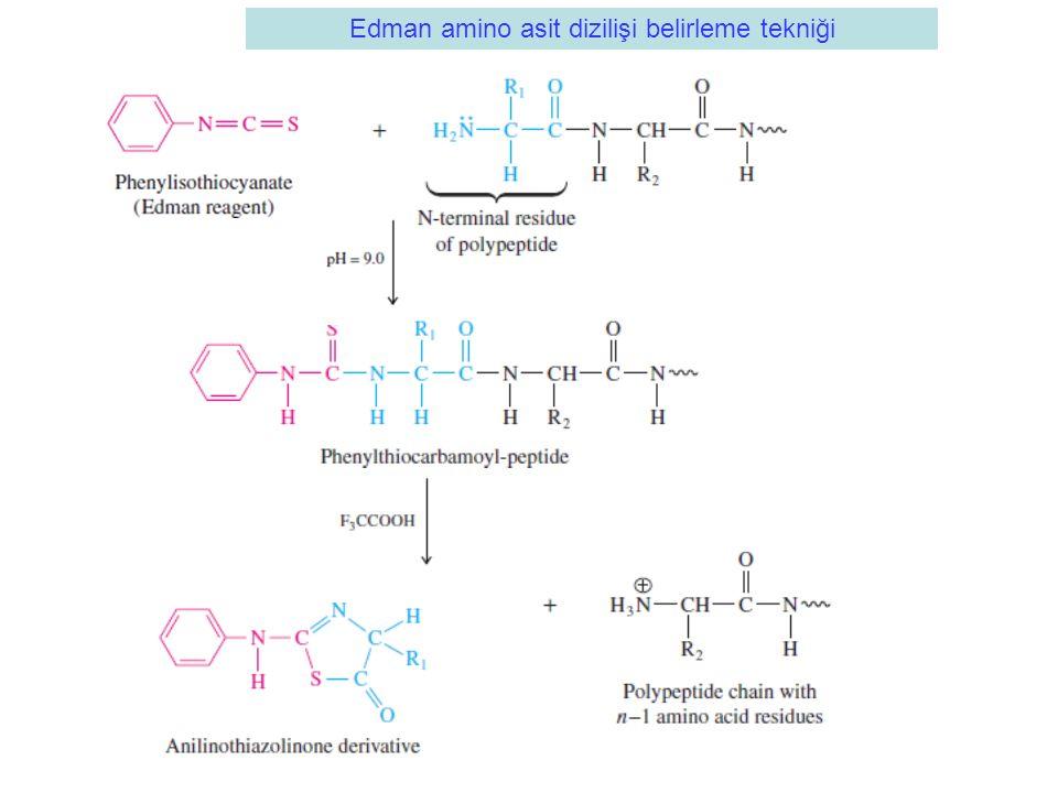 Edman amino asit dizilişi belirleme tekniği