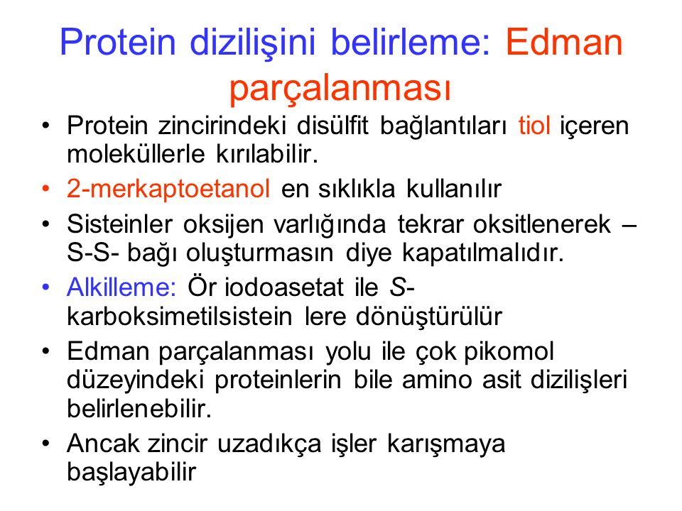 Protein dizilişini belirleme: Edman parçalanması