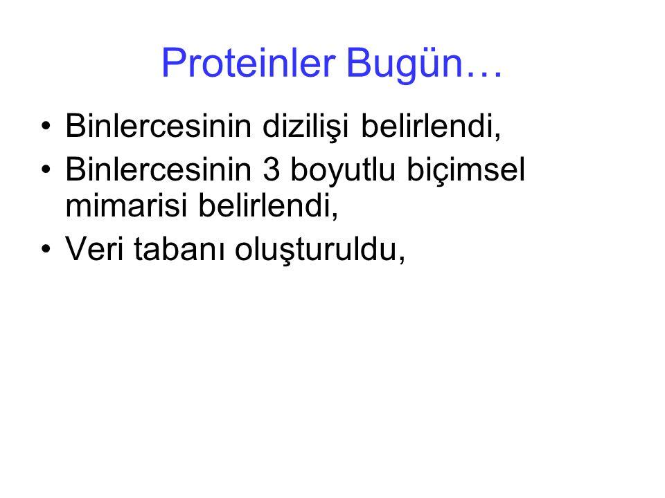 Proteinler Bugün… Binlercesinin dizilişi belirlendi,