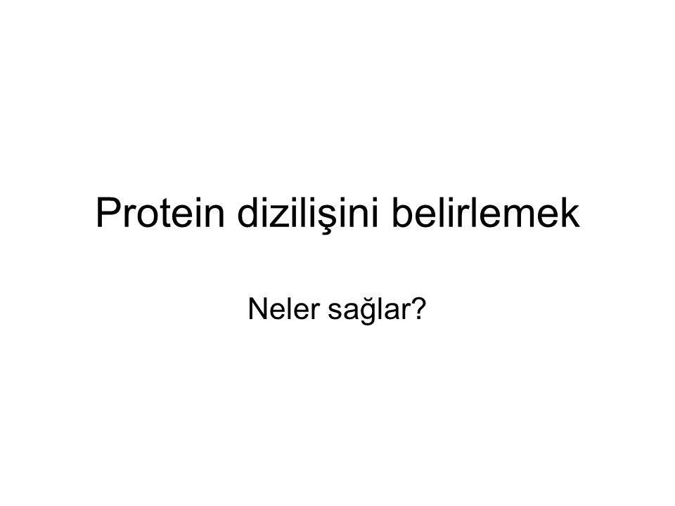 Protein dizilişini belirlemek