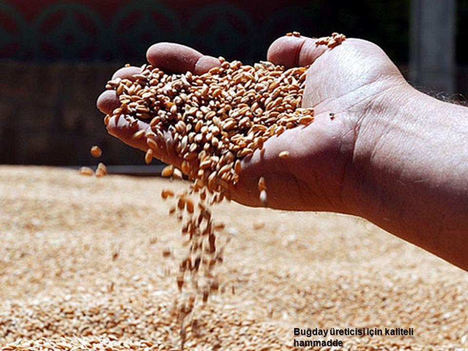 Buğday üreticisi için kaliteli hammadde