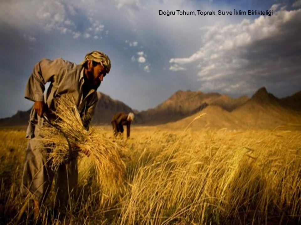 Doğru Tohum, Toprak, Su ve İklim Birlikteliği