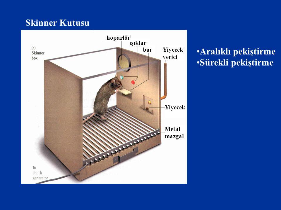 Skinner Kutusu Aralıklı pekiştirme Sürekli pekiştirme hoparlör ışıklar