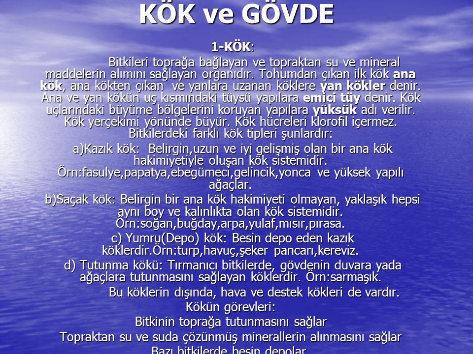 KÖK ve GÖVDE 1-KÖK: