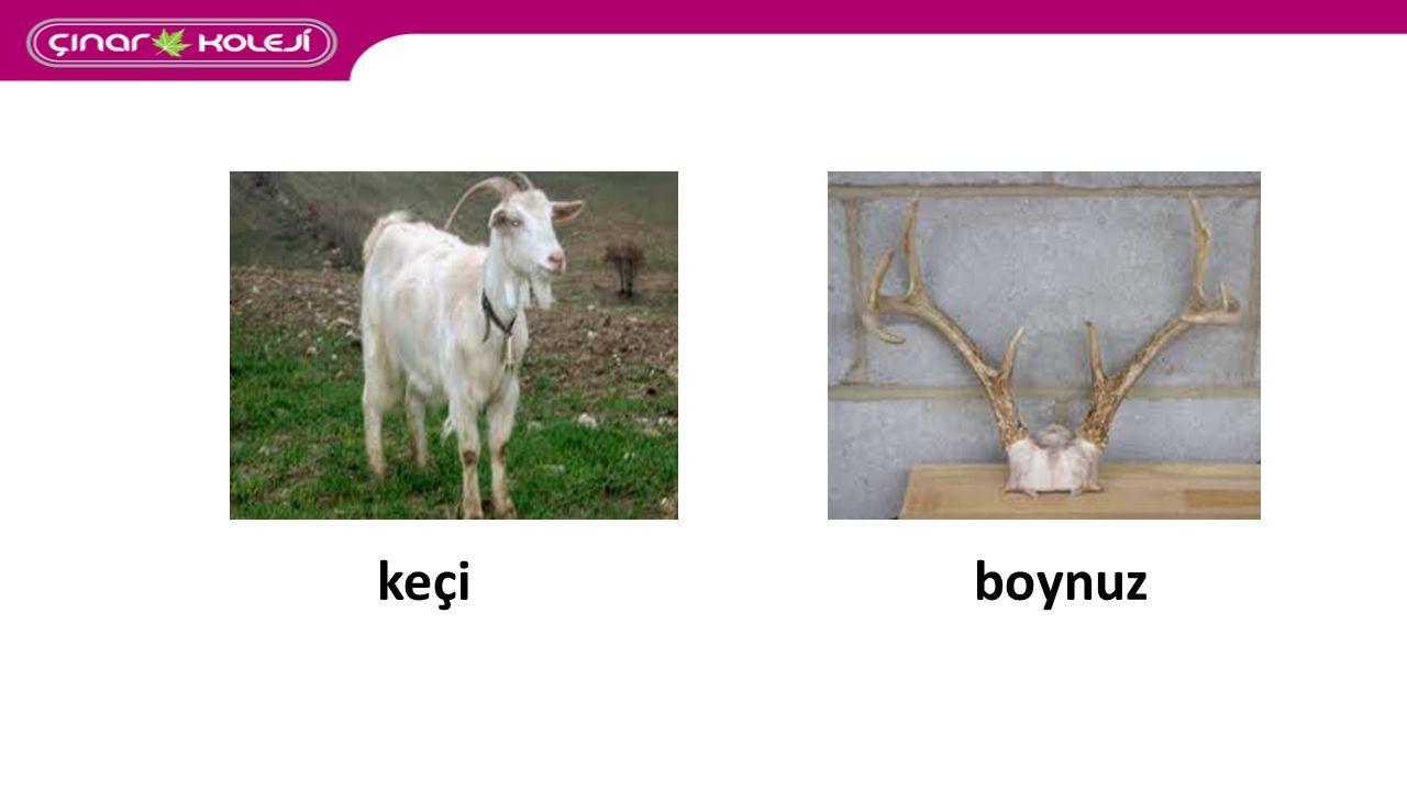 keçi boynuz