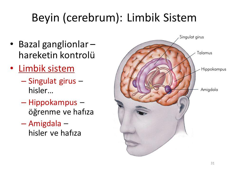 Beyin (cerebrum): Limbik Sistem