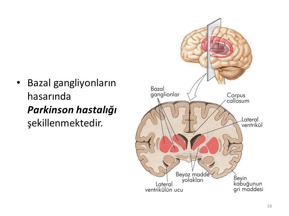 Bazal gangliyonların hasarında Parkinson hastalığı şekillenmektedir.