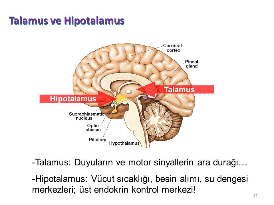 Talamus ve Hipotalamus