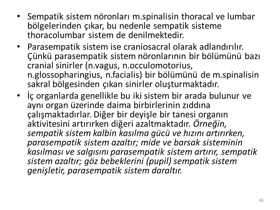 Sempatik sistem nöronları m