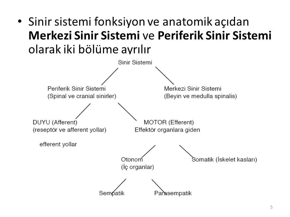 Sinir sistemi fonksiyon ve anatomik açıdan Merkezi Sinir Sistemi ve Periferik Sinir Sistemi olarak iki bölüme ayrılır