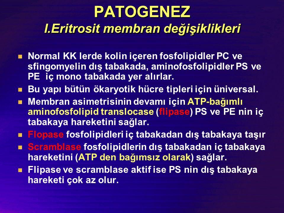 PATOGENEZ I.Eritrosit membran değişiklikleri