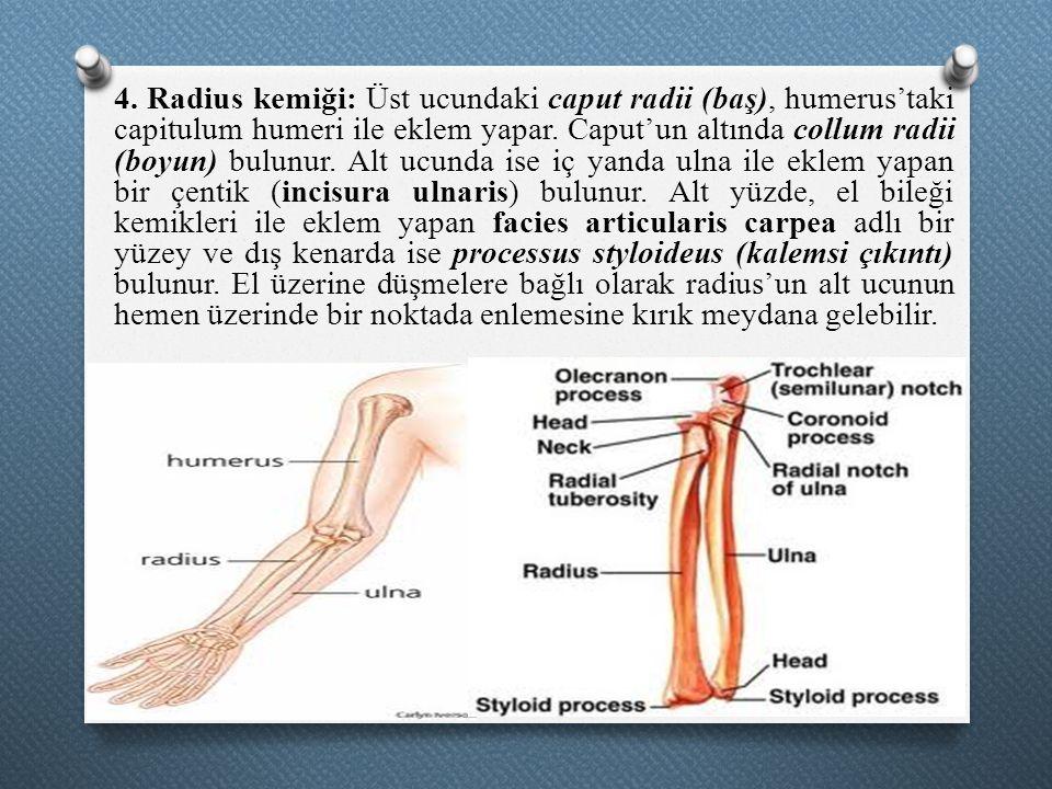 4. Radius kemiği: Üst ucundaki caput radii (baş), humerus'taki capitulum humeri ile eklem yapar.