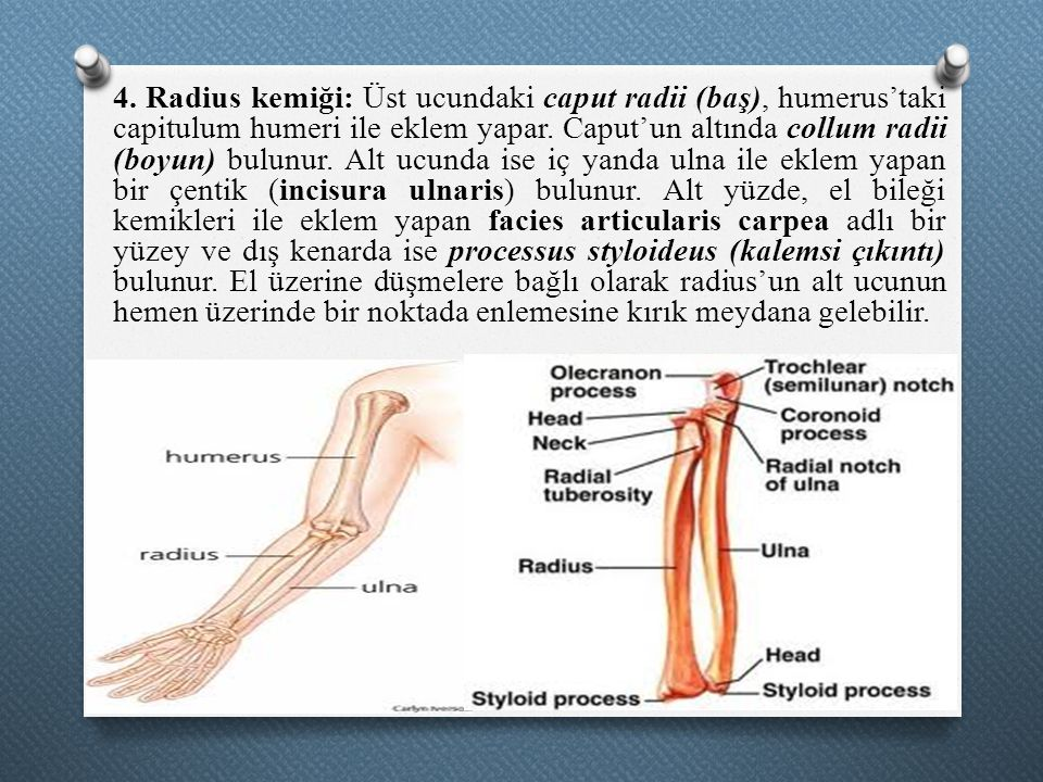 Radius.1. El B. Anatom. Pin Monitor Audio Radius 360 Image On ...