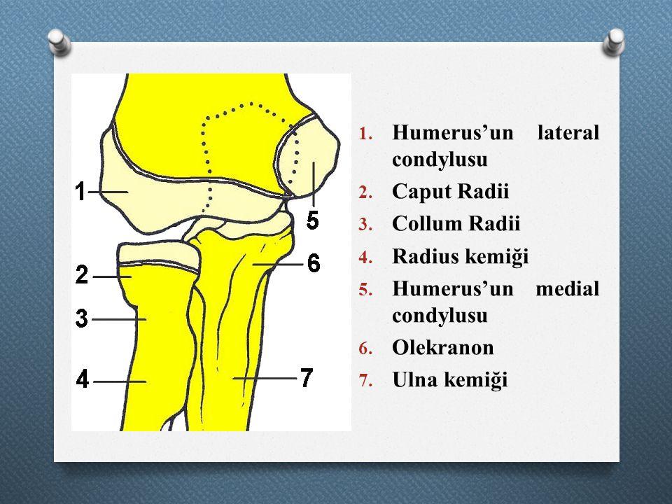 Humerus'un lateral condylusu