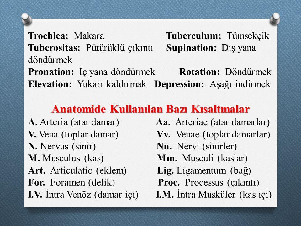 Anatomide Kullanılan Bazı Kısaltmalar